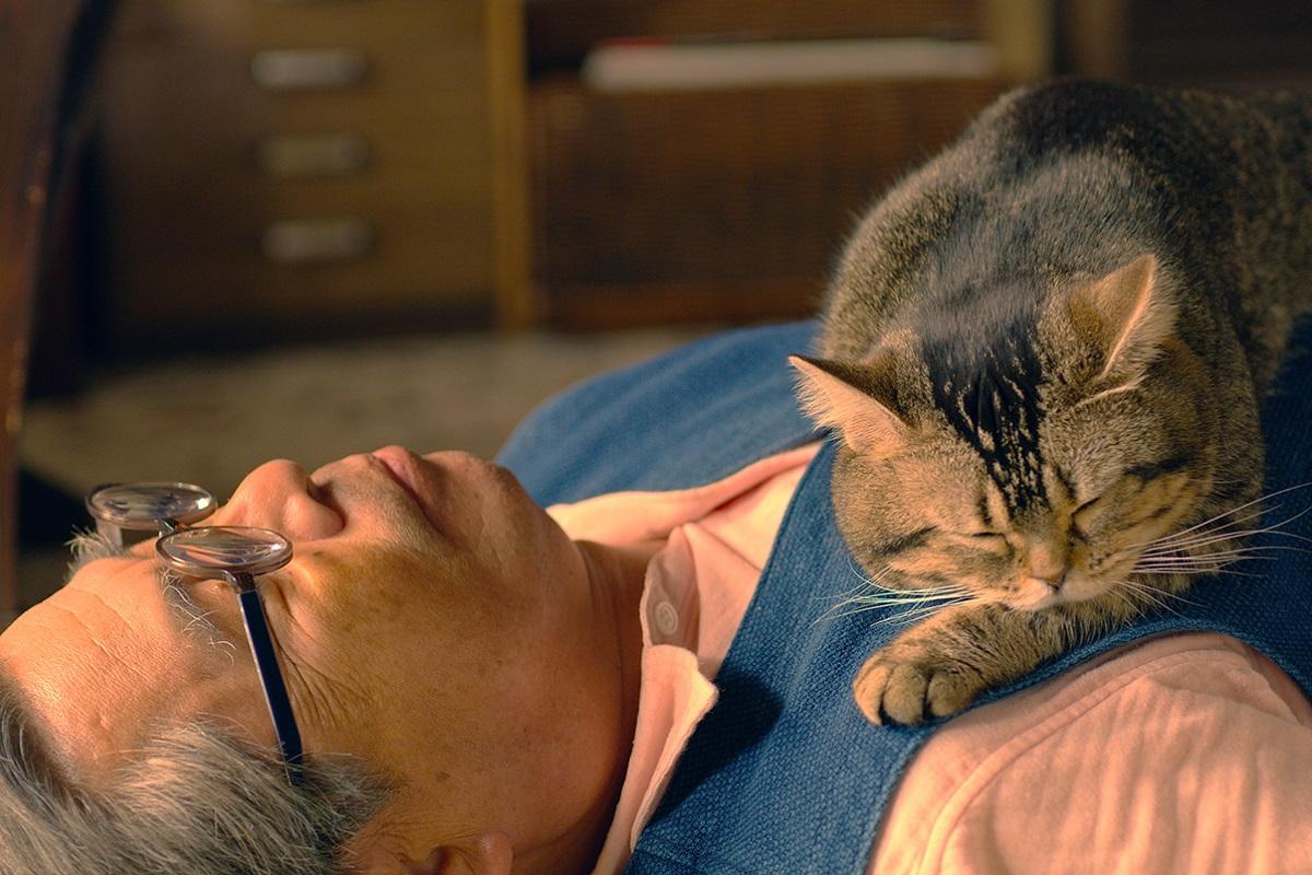 「猫が幸せになれば、人間も幸せになれる」岩合光昭が語る幸福論、写真家としての心掛けと映画への想い